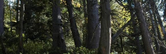 Inventari de boscos madurs del PNAP