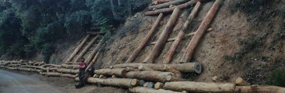Bioconstrucció al PNIN de Poblet